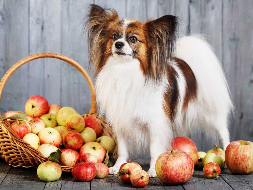 Apples for Dogs