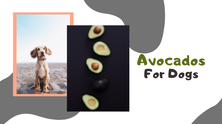 Avocados For Dogs