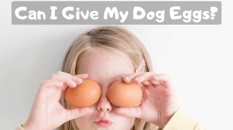 Can I Give My Dog Eggs_