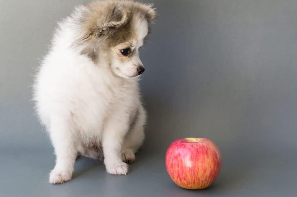 Apple as a dog treat