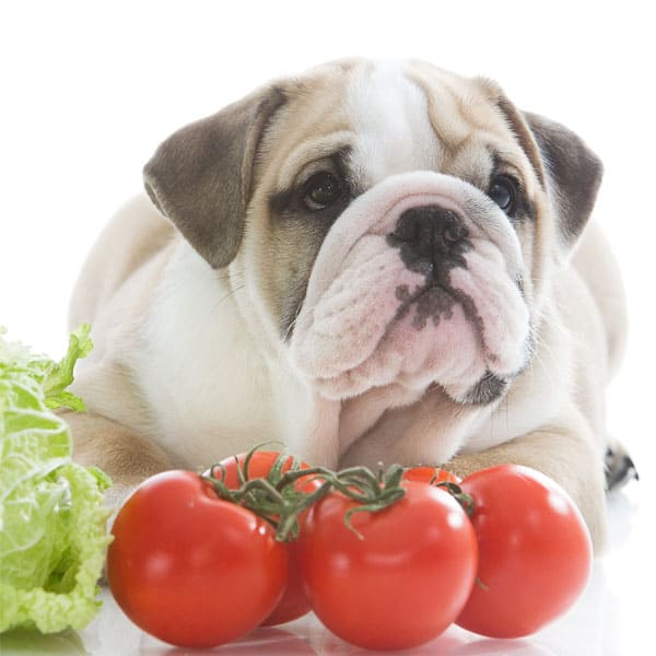 Dogs Tomatoes