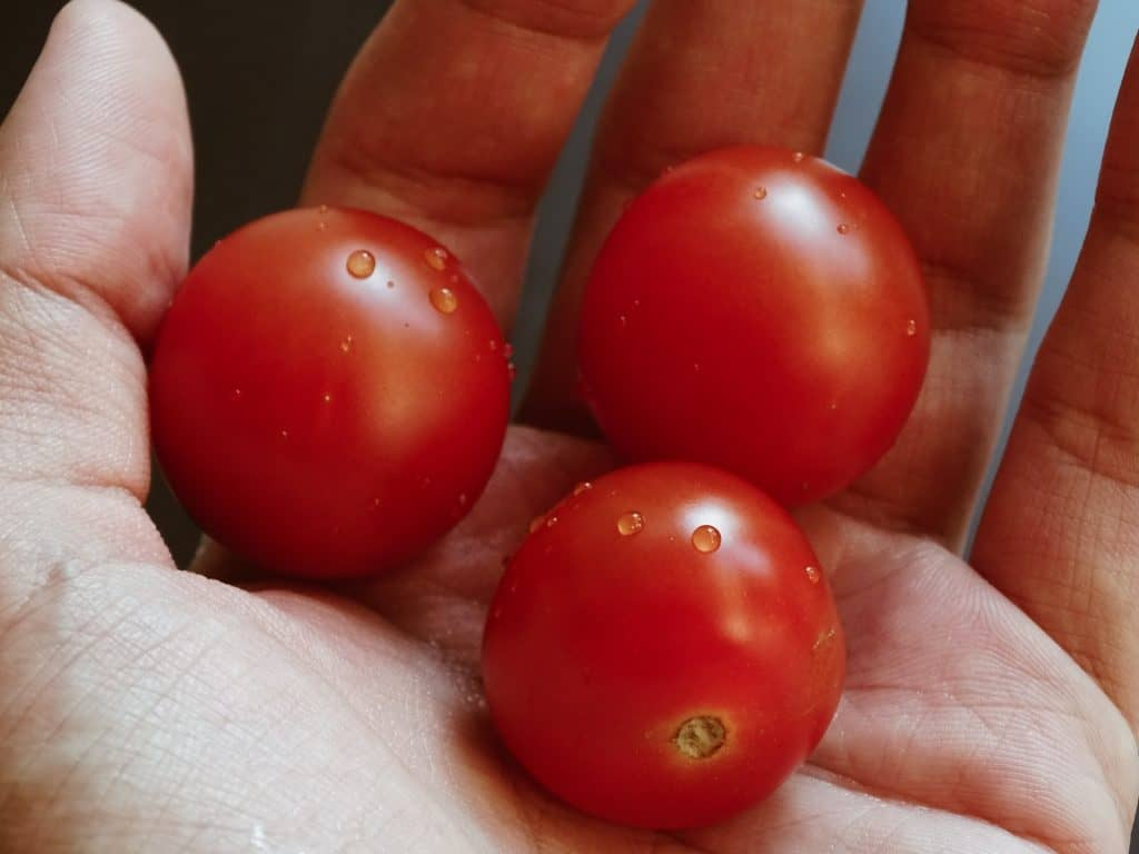 Serve Tomatoe