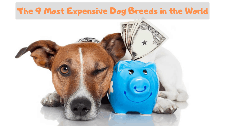 The 9 Most Expensive Dog Breeds in the World