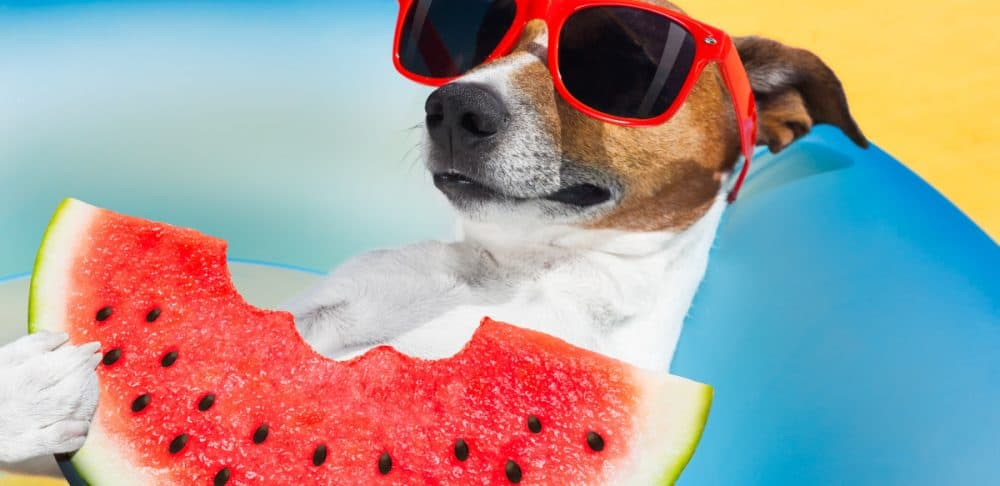 Watermelon and dogs