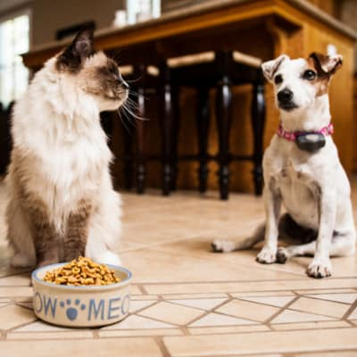 Dogs And cat food