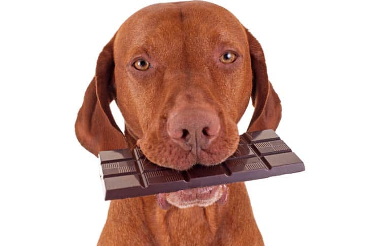 Dogs Eat Chocolate