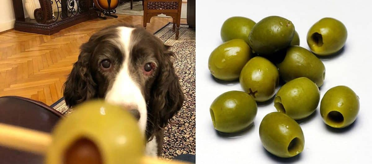 Olives And Dogs