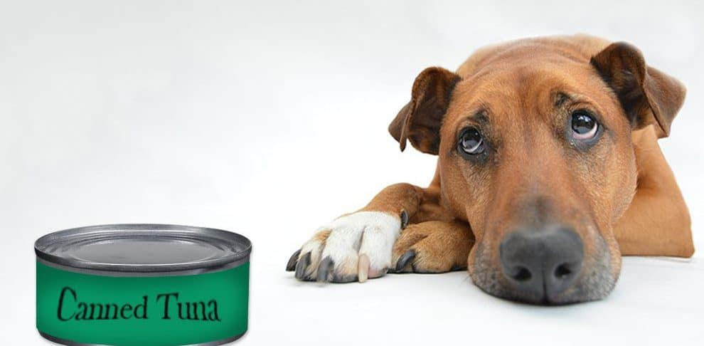 Tuna for dogs