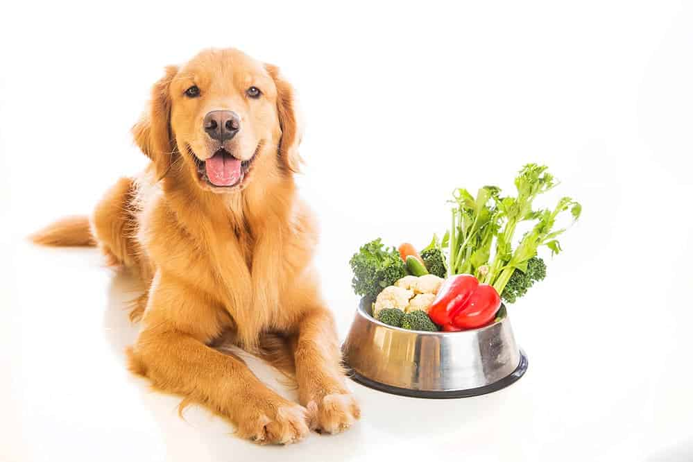 can dogs eat bell pepper