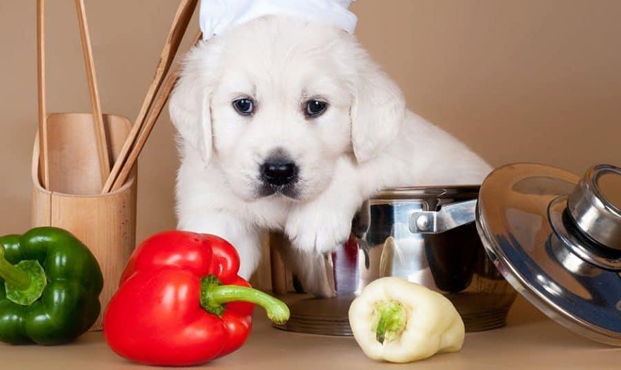 dog eat bell pepper