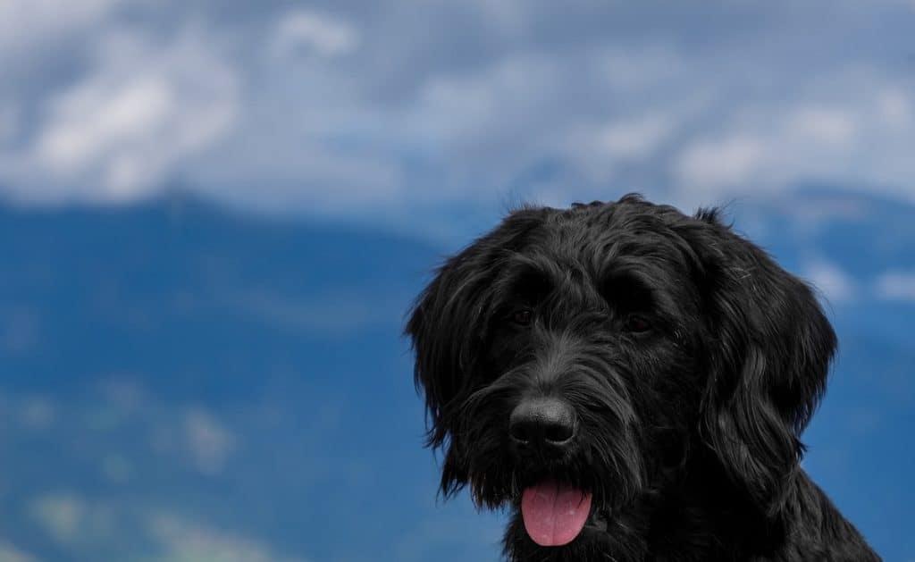 dogs eat raisins