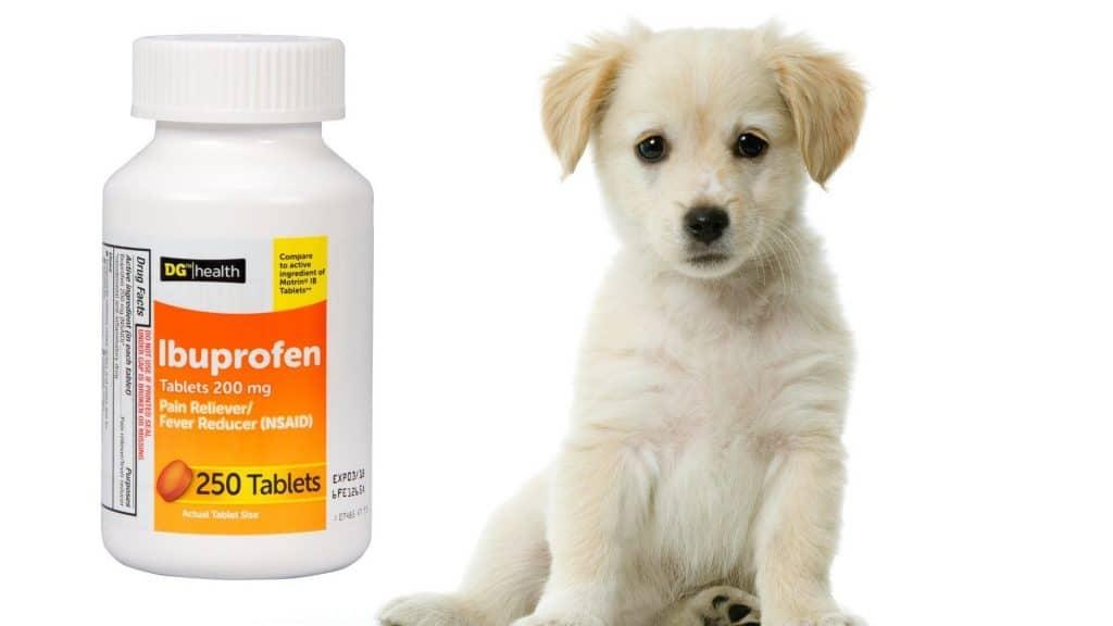 Giving dog ibuprofen