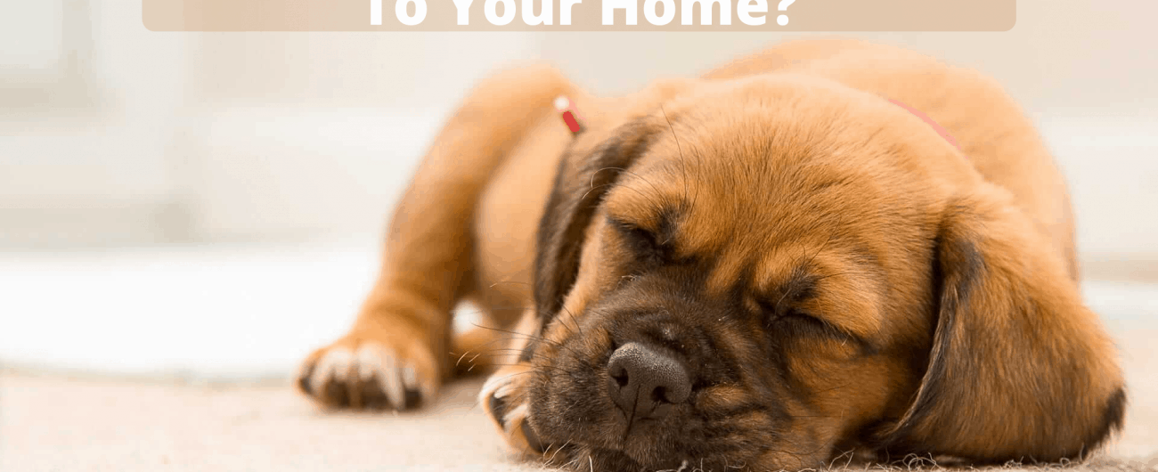 How To Introduce A New Dog To Your Home