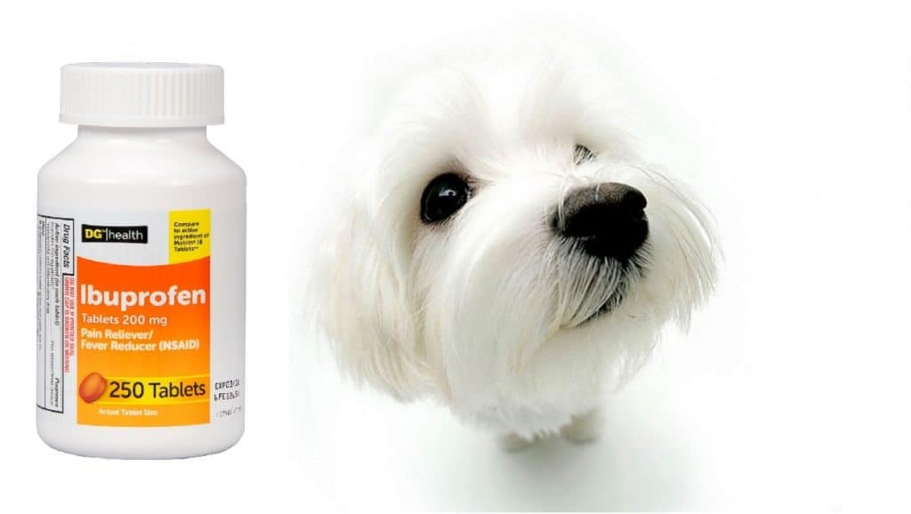 dogs and ibuprofen