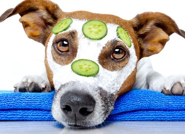 Can My Dog Eat Cucumber