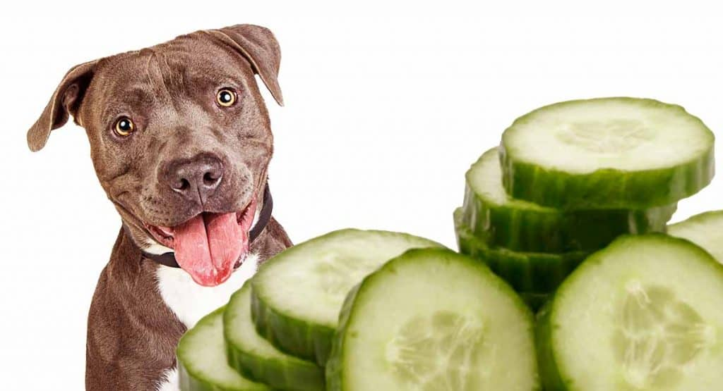 Cucumber and Dogs