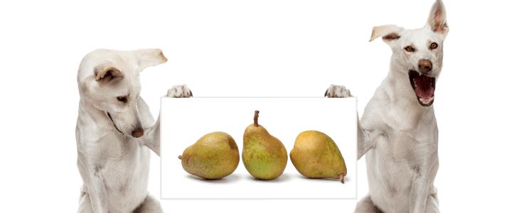dog feed pear