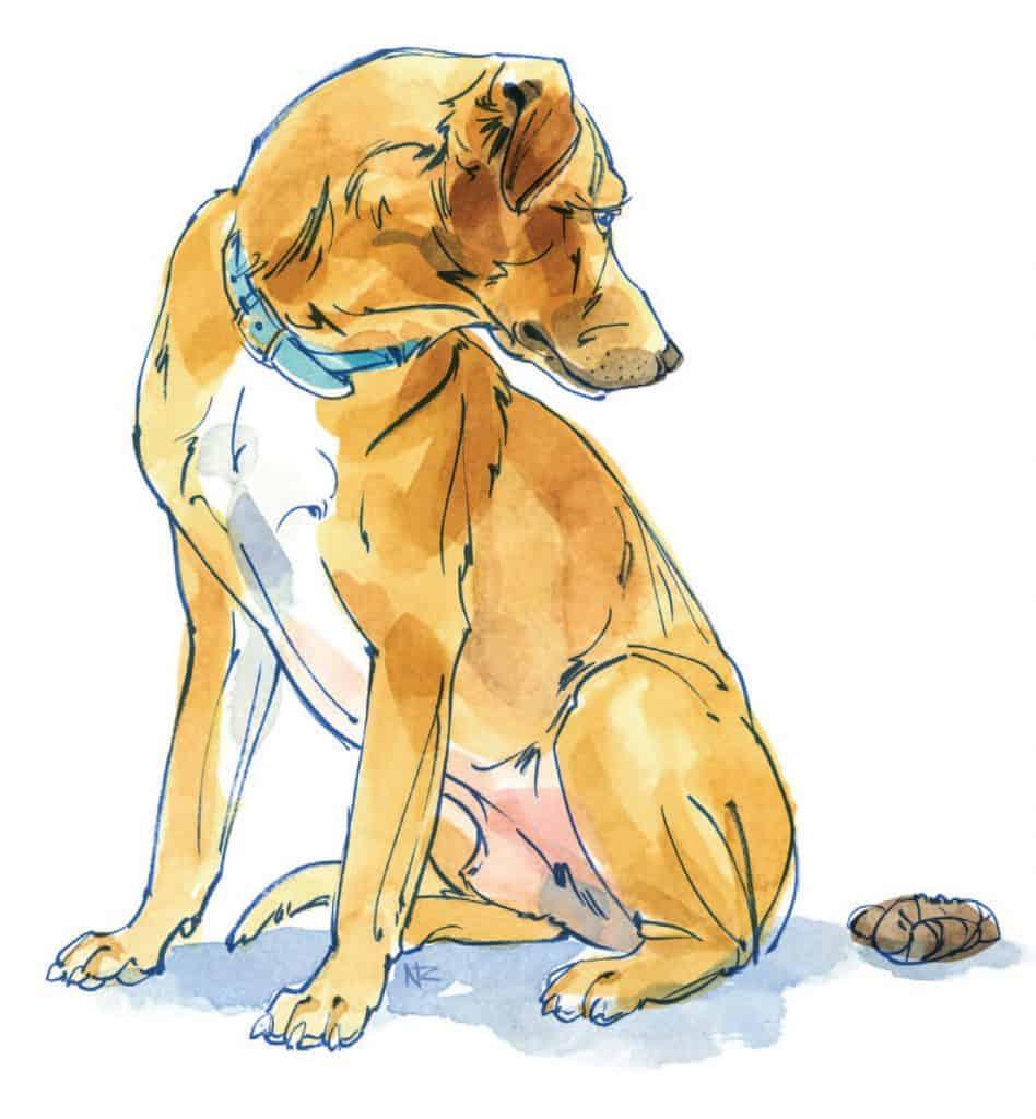 Dogs Poop