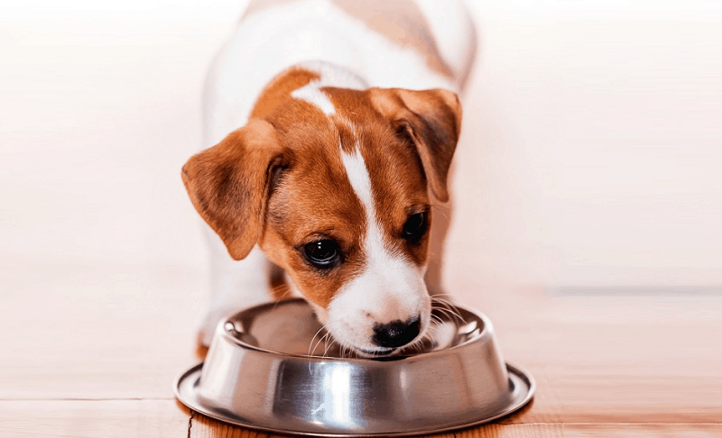 Food For Small Dogs 1